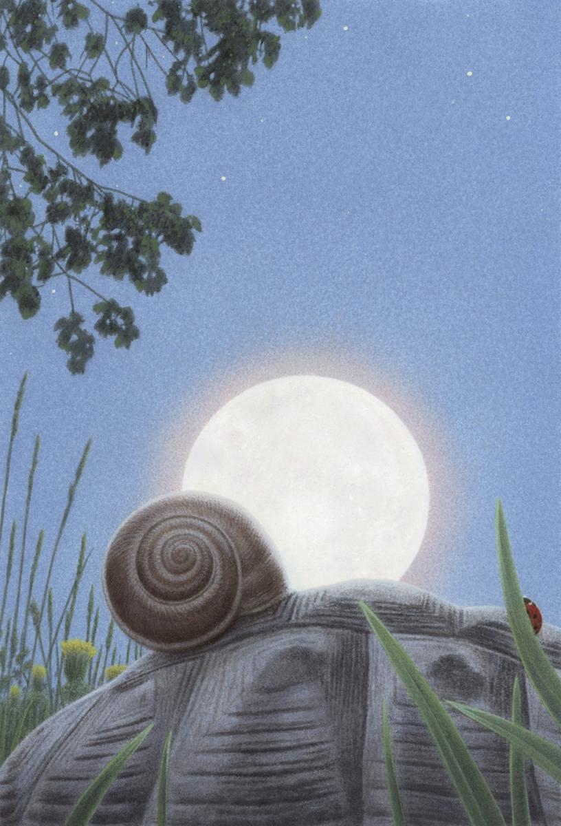Картинки по запросу sea snail