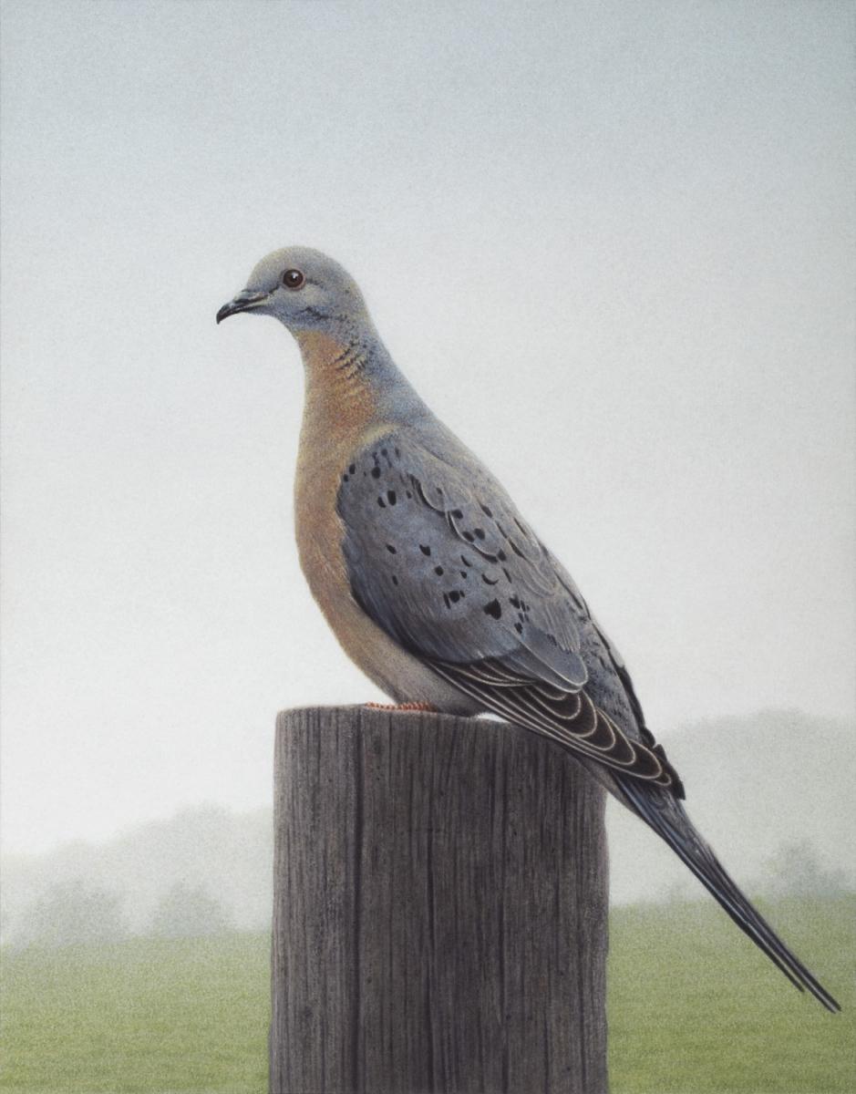исчезнувшие животные и птицы в картинках задерживайте